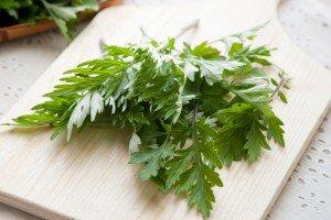 Armoise annuelle bio (Artemisia annua)